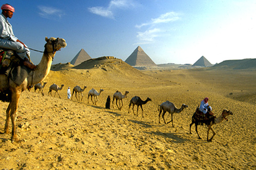 egypt-tours-camel-travel
